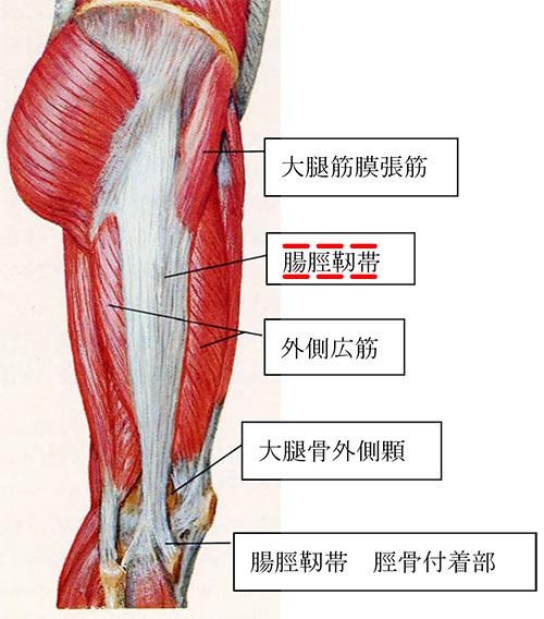 腸脛靭帯炎 ランナーズニー 腸脛靭帯の構造